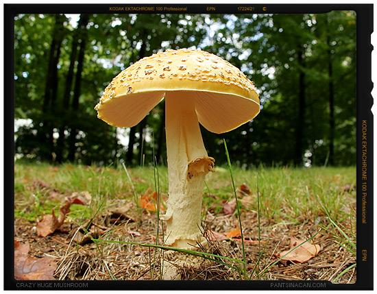 Wicked Huge Mushroom