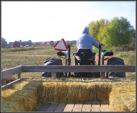 Hay ride to the pumpkin field.