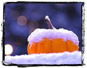 A snowy gourd I found on flikr.